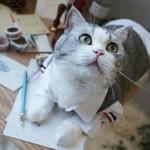 雪山灵猫是个约吹吖