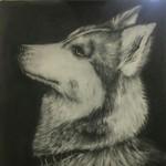官方认证_西伯利亚雪橇犬_V
