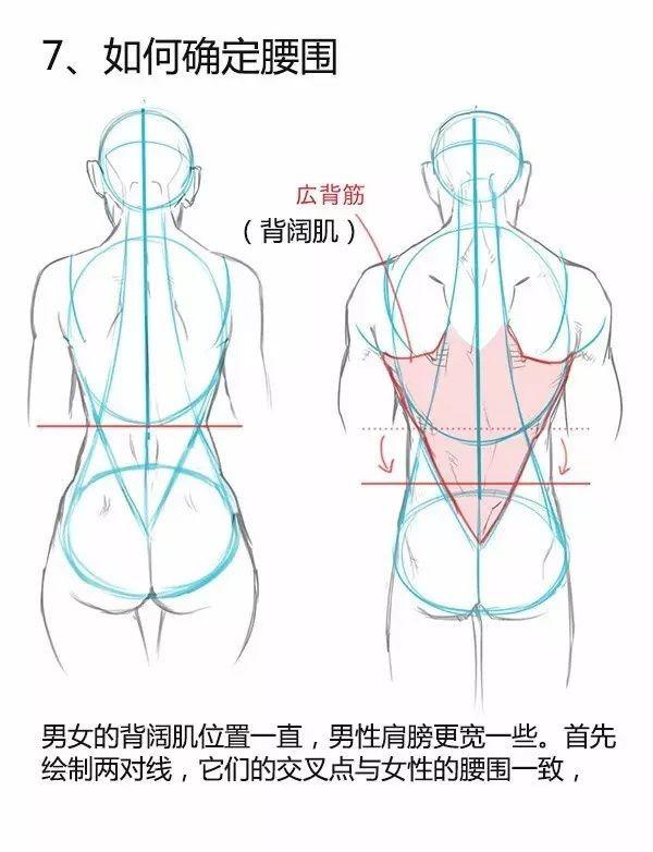 人体绘画教程之男女背部的差异画法